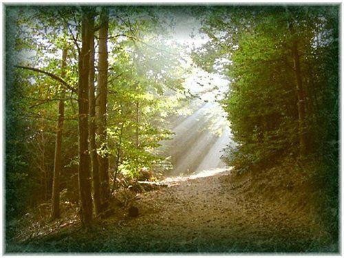 un chemin de vie dans la nature entouré d'arbres
