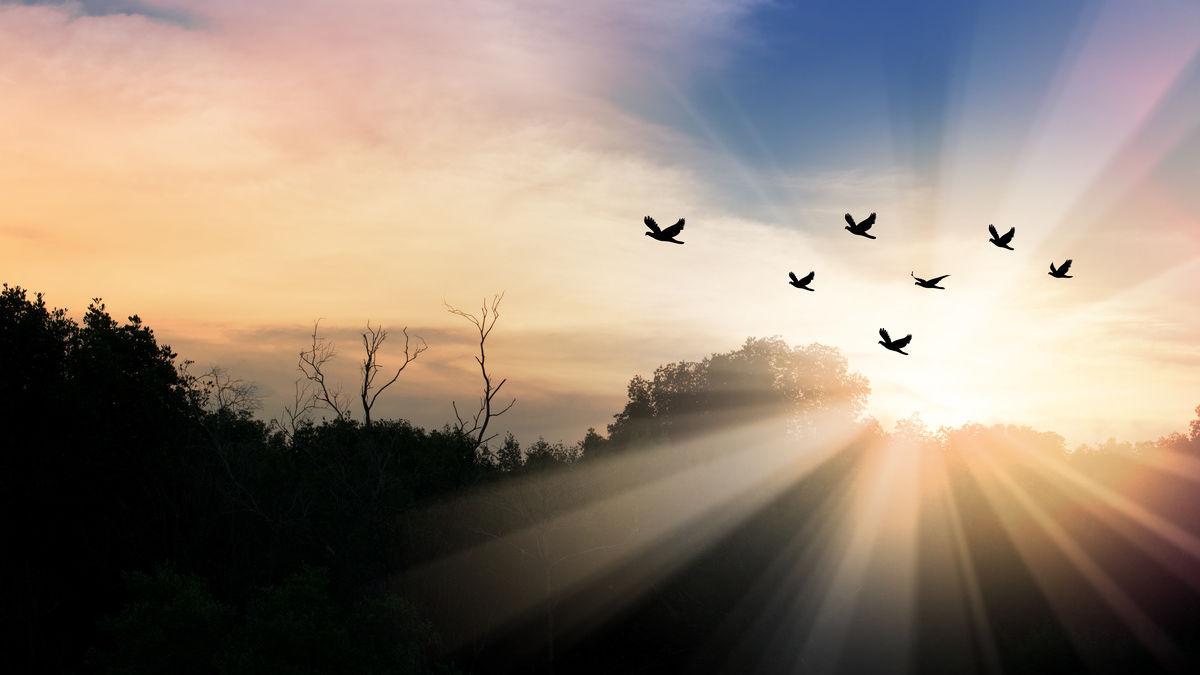ornithomancie