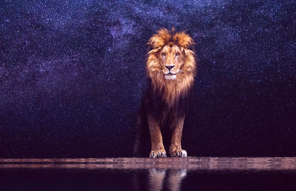 saison lion